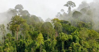 جنگل های استوایی و بارانی چیست؟