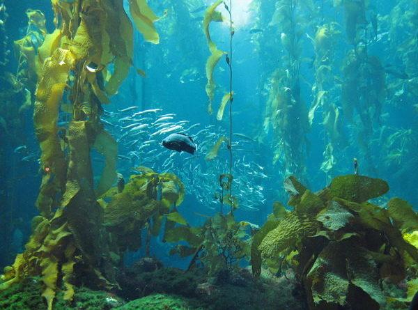 چگونگی زندگی گیاهان در اقیانوس ها