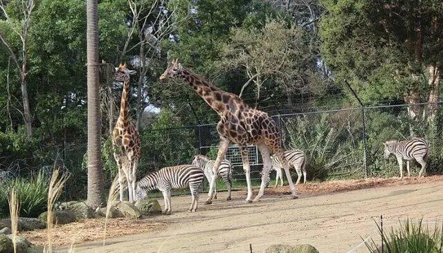 پارک جانورشناسی سری ونکاتسوارا